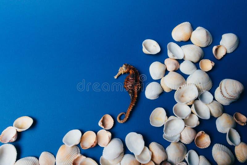 Seashells, denny koń, koral na błękitnym tle, flatpley zdjęcia royalty free