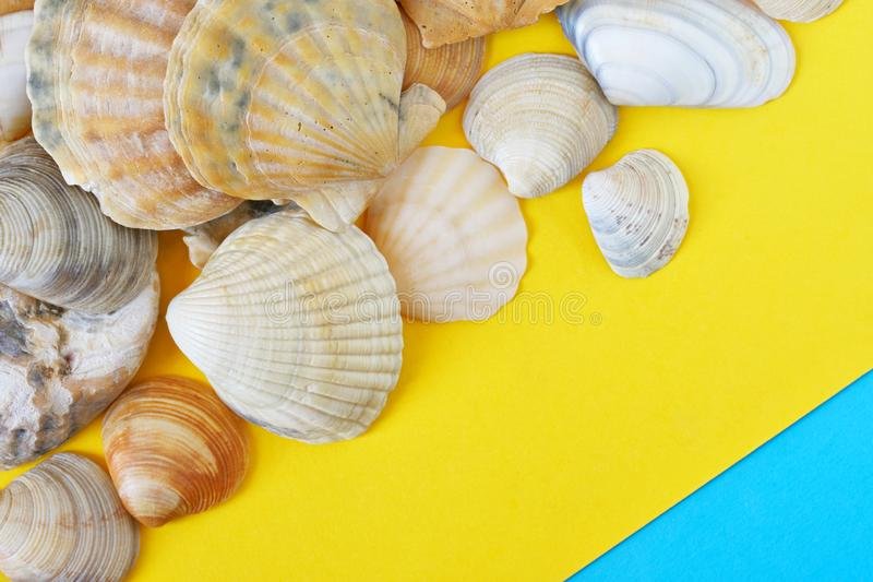 Seashells on a diagonal yellow and blue background, symbolizing the sea and sand on the beach. Travel and tourism related items. Copyspace. Daylight stock image