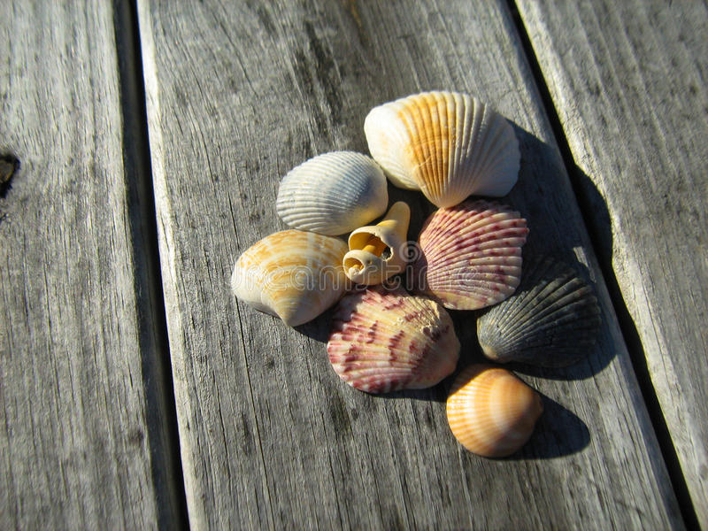 Seashells on dock royalty free stock photography