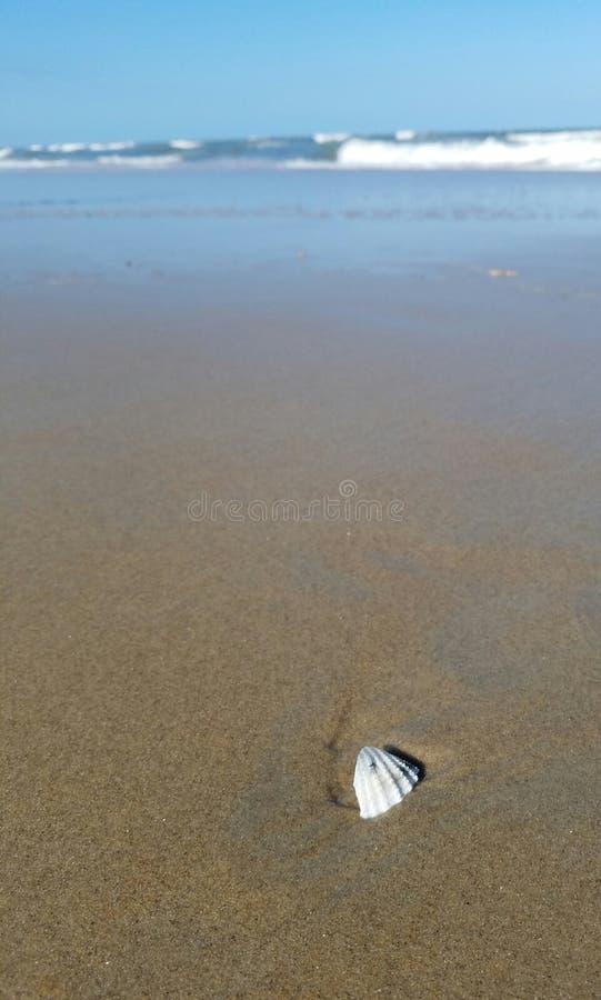 Seashells durch die Küste stockfoto