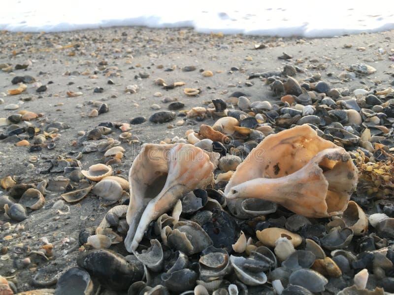 Seashells durch die K?ste lizenzfreie stockfotografie