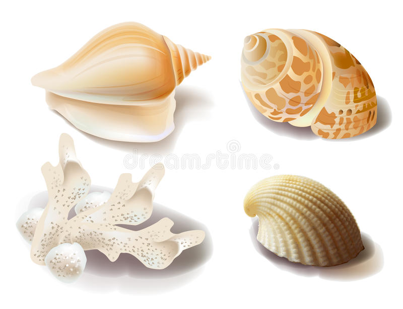 Seashells e coral ilustração royalty free