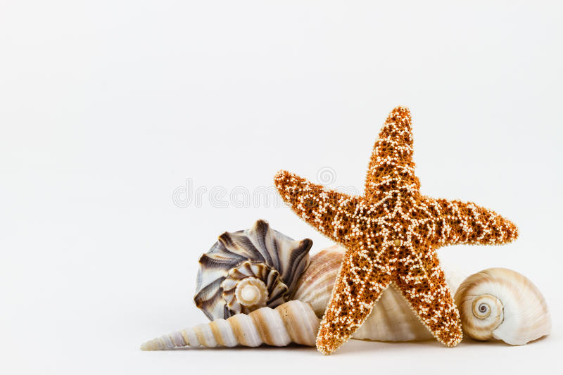 Seashells e um starfish. fotografia de stock royalty free