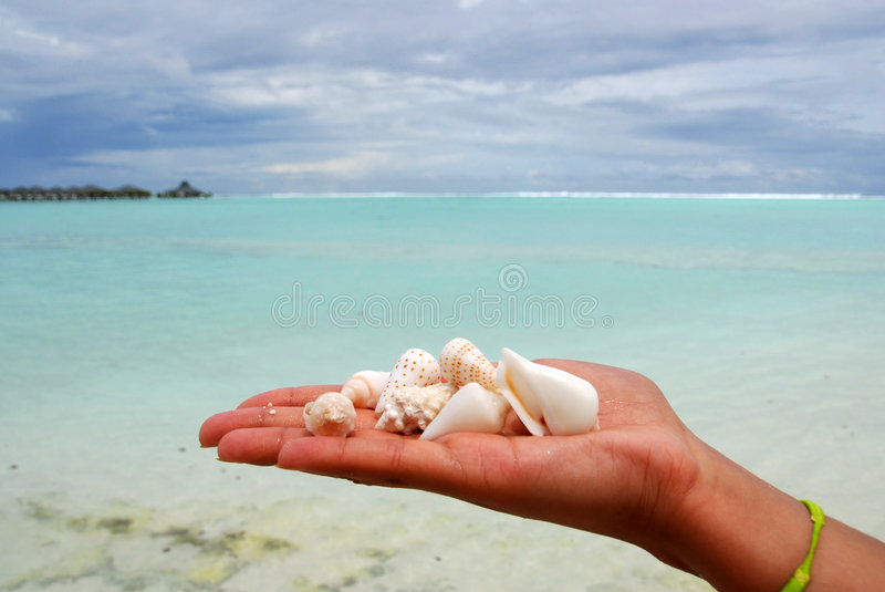 Seashells in einer Hand stockfotos