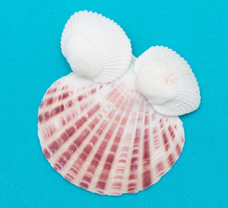 Seashells em um fundo azul imagem de stock royalty free