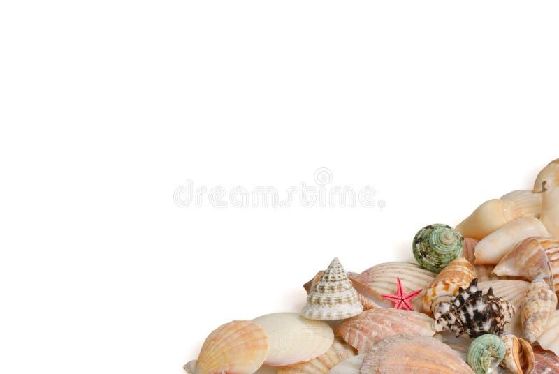 Seashells en el fondo blanco imagen de archivo libre de regalías