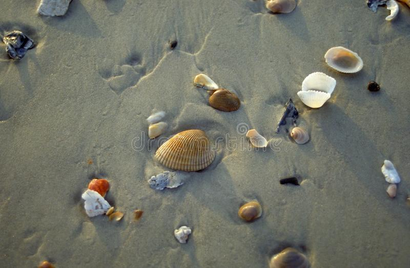 Seashells en la arena fotografía de archivo