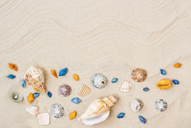 Seashells en la arena Fondo de las vacaciones de verano del mar con el espacio para el texto fotografía de archivo libre de regalías