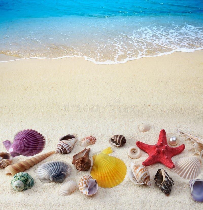 Seashells en la playa de la arena imagen de archivo