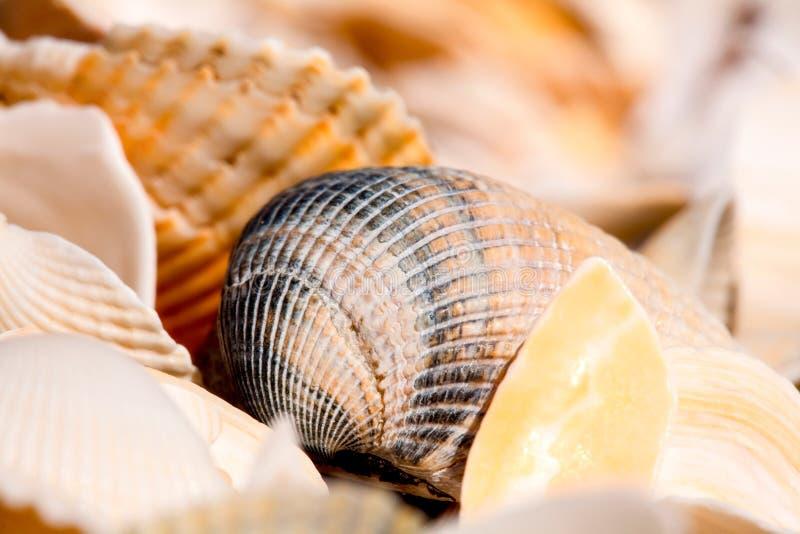 Seashells Filled Frame stock photos