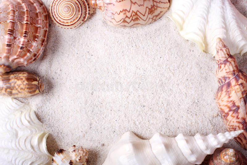 Download Seashells frame stock image. Image of frame, aquatic - 14105591