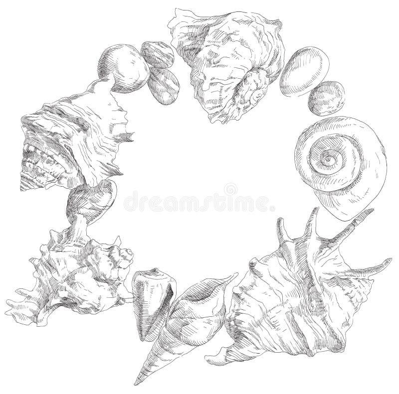 Seashells frame background. Summer beauty seashells frame background. Vector illustration royalty free illustration