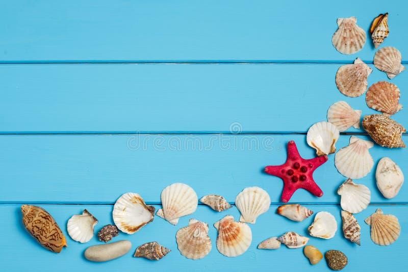 Seashells frame on blue wood background royalty free stock photo