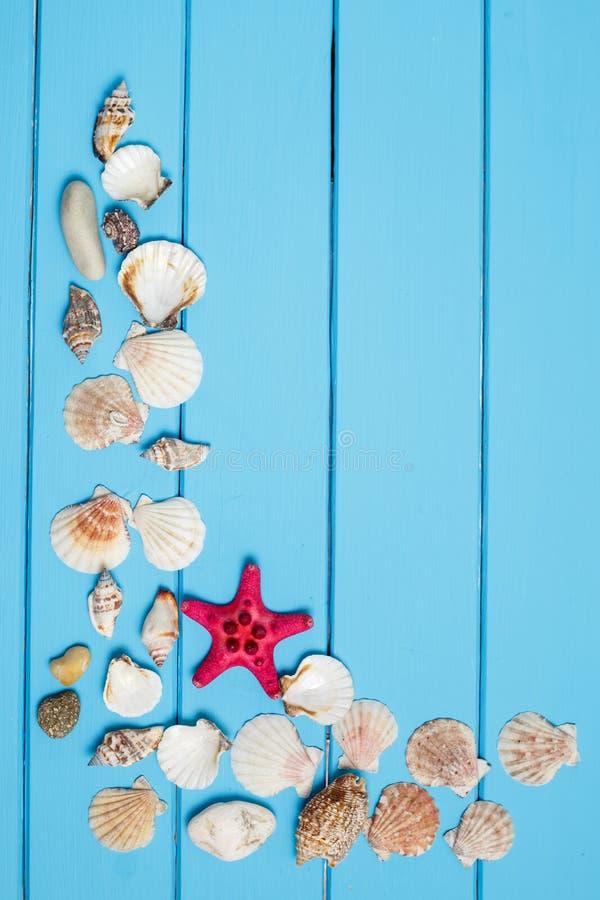 Seashells frame on blue wood background royalty free stock photos
