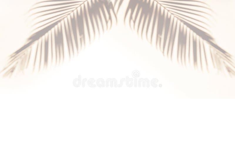 Seashells gestalten auf Sandhintergrund Palmeschatten auf einem blauen Hintergrund lizenzfreie stockbilder
