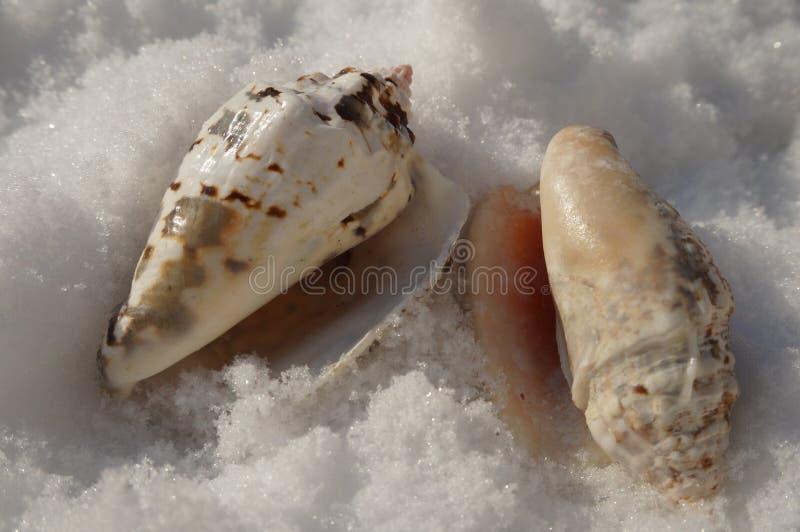 Seashells glisten in the sun in the snow. Summer attributes in winter royalty free stock photo