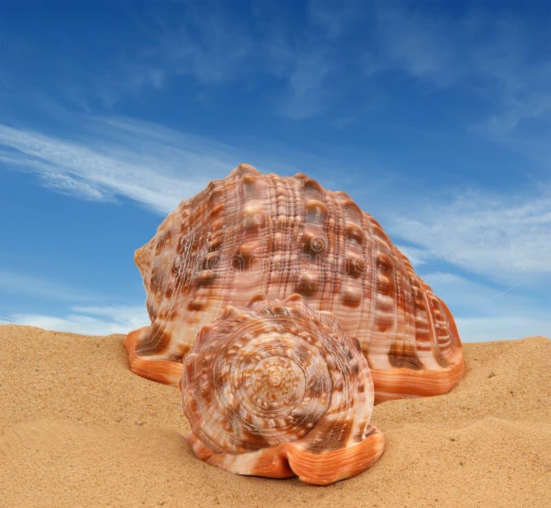 Seashells grandes en la arena imágenes de archivo libres de regalías
