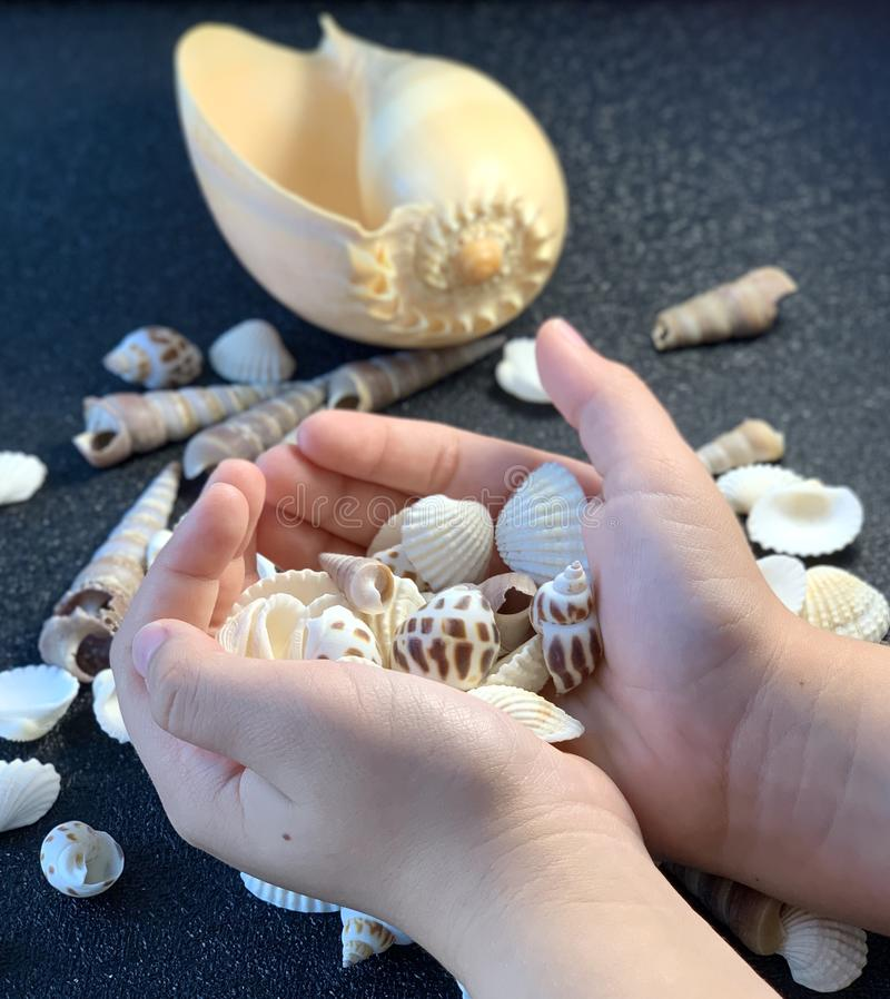 Seashells in hands. Sea shells at the child in hands royalty free stock photography