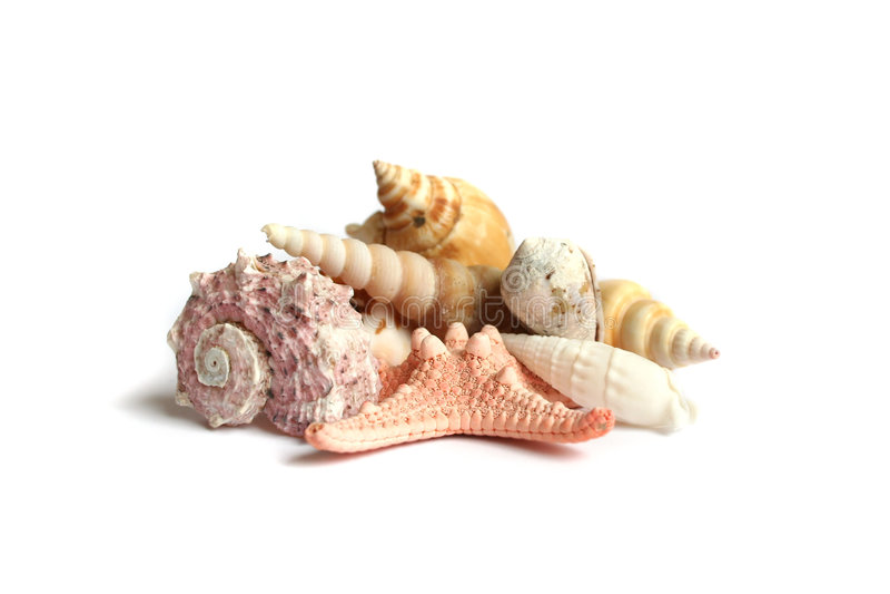 Seashells from holiday. On white background royalty free stock photo