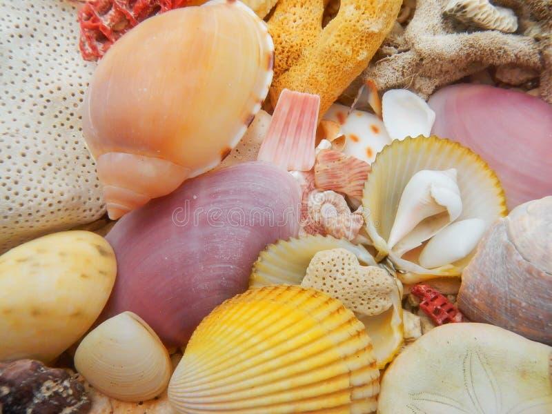 Seashells i nieżywy ciężki koral na plaży obrazy royalty free