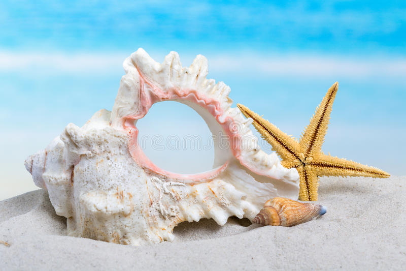 Download Seashells i rozgwiazda zdjęcie stock. Obraz złożonej z łuskanie - 53784384