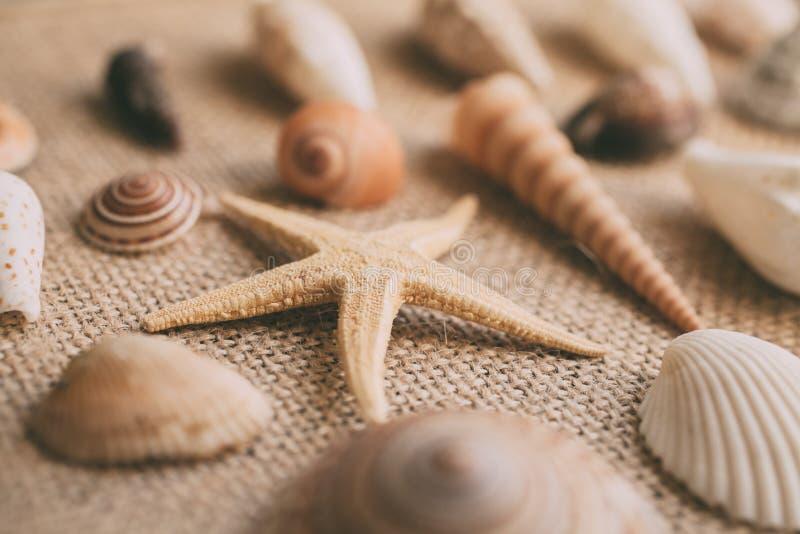 Seashells i rozgwiazdy t?o Wiele r??ni seashells wypi?trzaj?cy wp?lnie ilustracja wektor