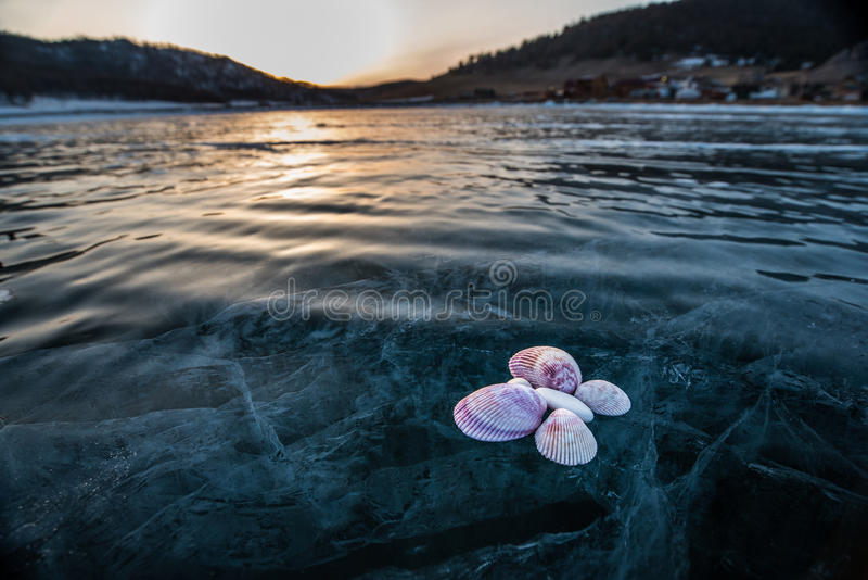 seashells on the ice stock images