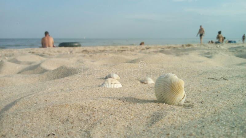Seashells im Sand stockfotografie