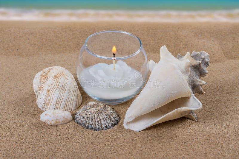 Download Seashells stock photo. Image of pebble, nobody, life - 37430024