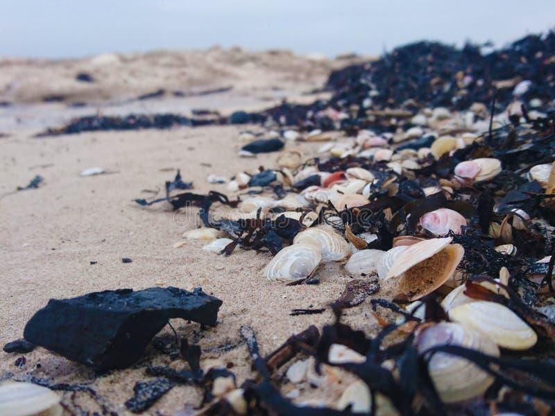 Seashells na morzu bałtyckim obrazy stock