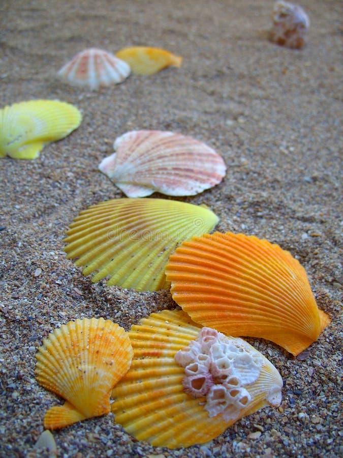 Seashells na piaskowatej plaży zdjęcia stock