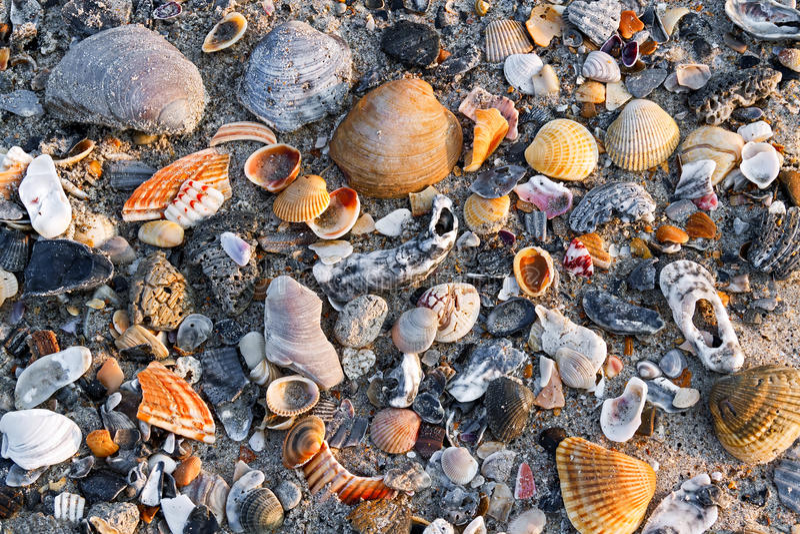Seashells na Piaskowatej plaży fotografia royalty free