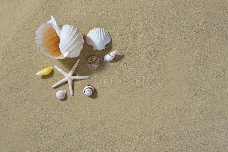 Seashells na piaskowatej plaży obrazy royalty free