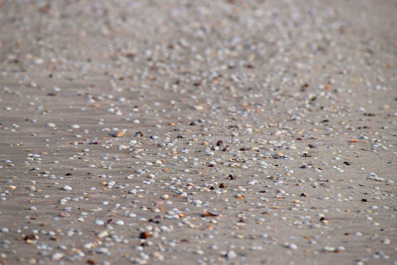 Seashells na Piaskowatej plaży - Abstrakcjonistyczny Morski tło fotografia stock