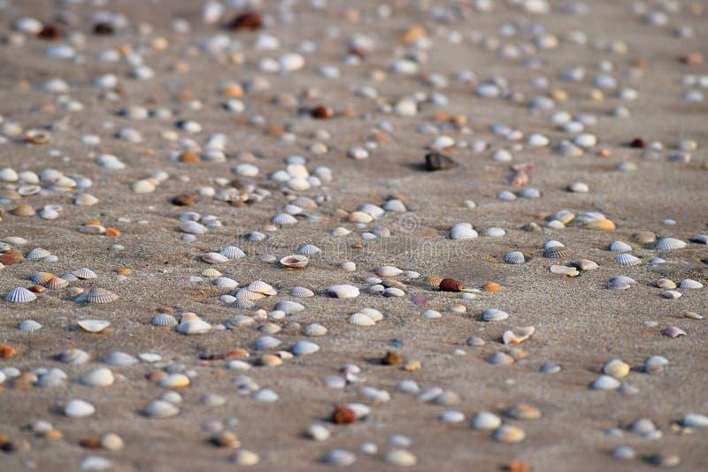 Seashells na Piaskowatej plaży - Abstrakcjonistyczny Morski tło zdjęcie stock