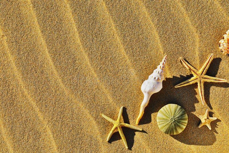 Seashells na piaskowatej plaży z kopii przestrzenią zdjęcie stock