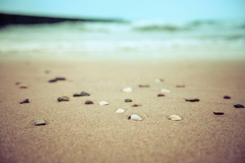 Seashells na piaskowatej plaży zamazywali lata tło fotografia stock