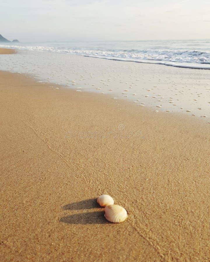 Seashells na Piaskowatej pla?y zdjęcia stock