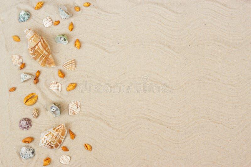 Seashells na piasku Denny wakacje t?o z przestrzeni? dla teksta fotografia stock