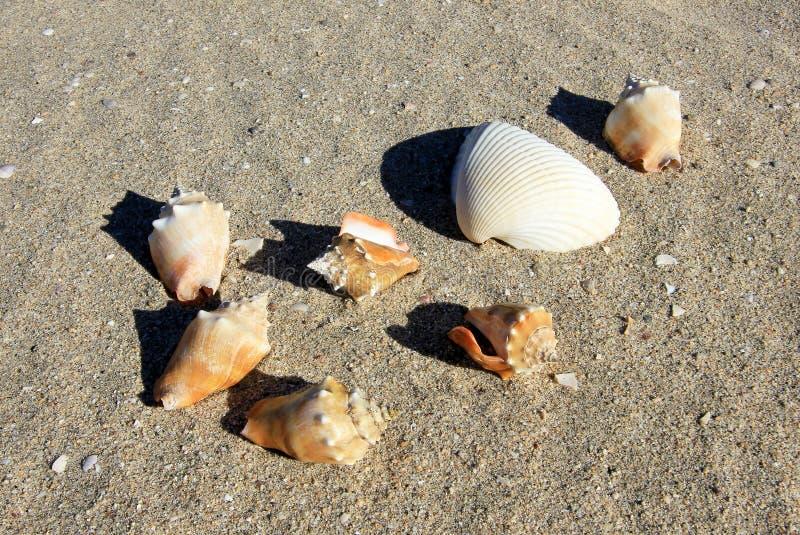 Seashells na piasku plaża, Baj Kalifornia obrazy stock