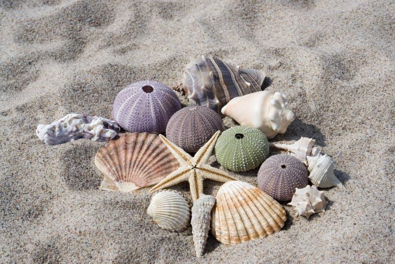 Seashells na praia fotos de stock
