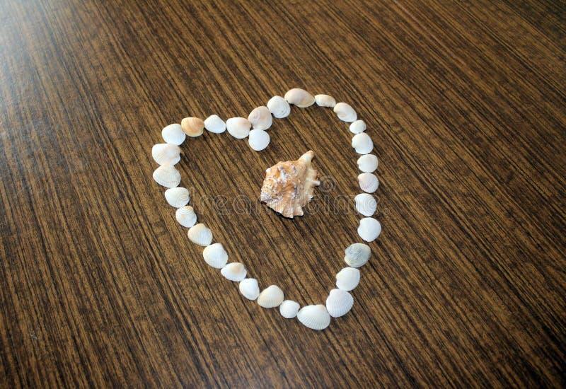 Seashells na stole obrazy royalty free