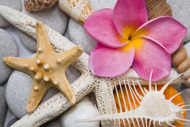 Seashells nell'alto tasto fotografia stock