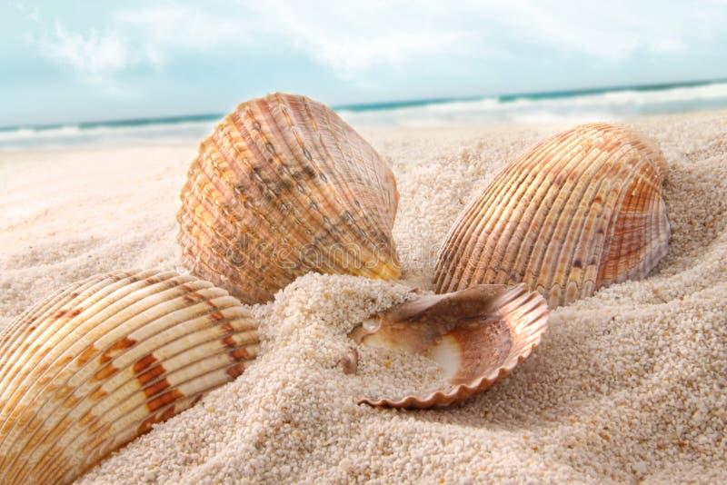 Seashells nella sabbia immagine stock libera da diritti