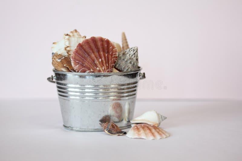 Seashells-noch Leben stockfotos