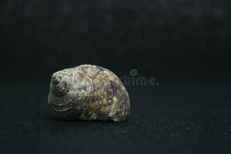 Seashells 4 lizenzfreie stockfotos