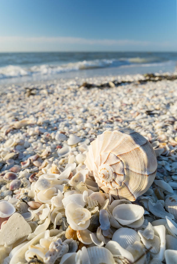 Free Seashells On The Beach 2 Stock Images - 52470634