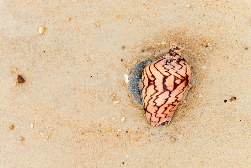 Download Seashells With A Pattern On The Sand Stock Photo - Image of macro, natural: 85271900