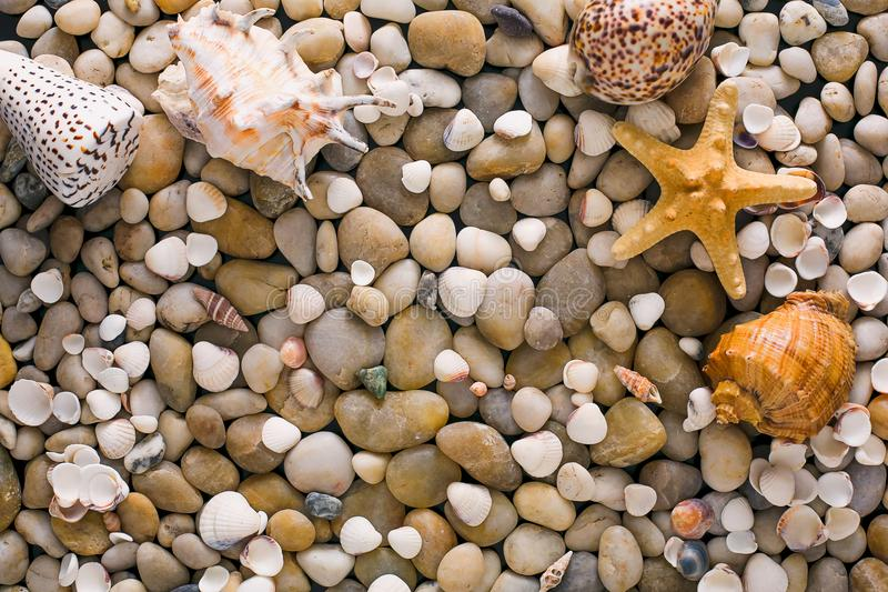 Seashells and pebbles background, natural seashore stones royalty free stock photo