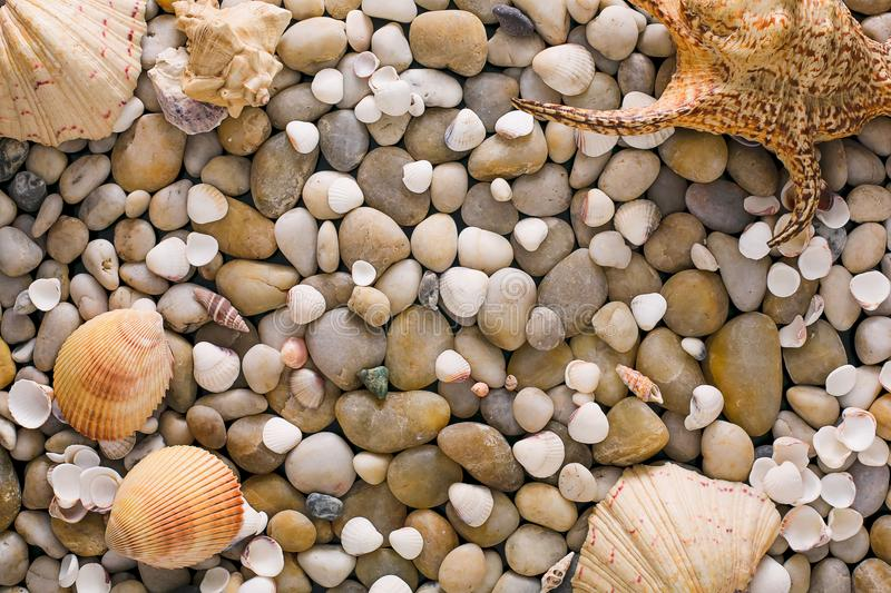 Seashells and pebbles background, natural seashore stones stock photography